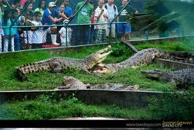 Davao Crocodile Farm