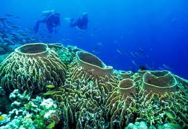 This underwater sanctuary is the pride of the Philippines and its people