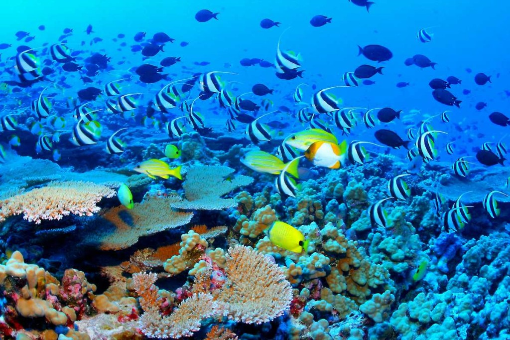 Tubbataha Reefs National Park: A Paradise for Divers