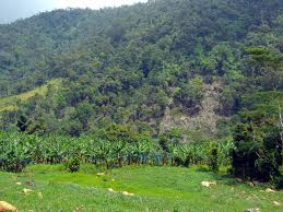 Bukidnon Forest Inc