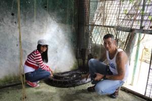 python in bohol